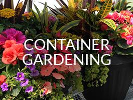 containergardening