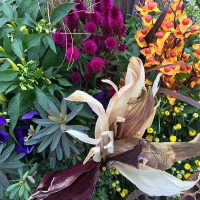 5 Great Gardening Tips for Fall
