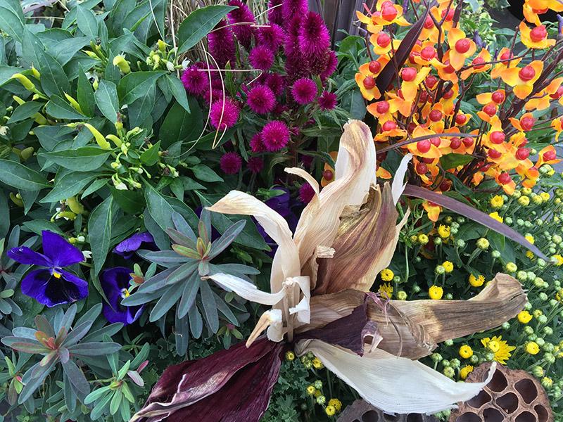5 Great Gardening Tips For Fall Brantim Country Garden Centre