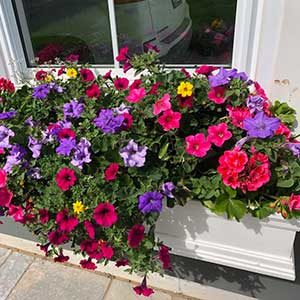 30-inch (plastic) window box