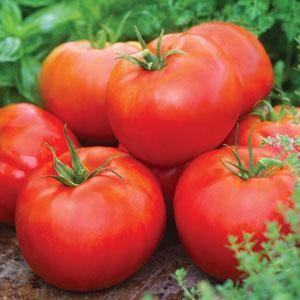 Tomato - Big Daddy