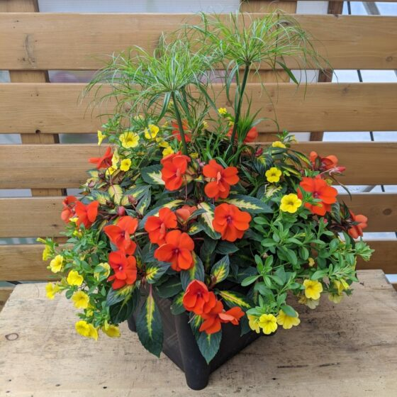 Summer Mix Square Containers