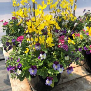 Spring Fling 14 inch container
