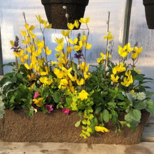 Spring Fling 24 inch window box
